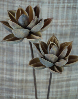Lotus natural dried flowers Lotus decorative floral home furnishings shooting props art dried flowers Buddha Ornaments