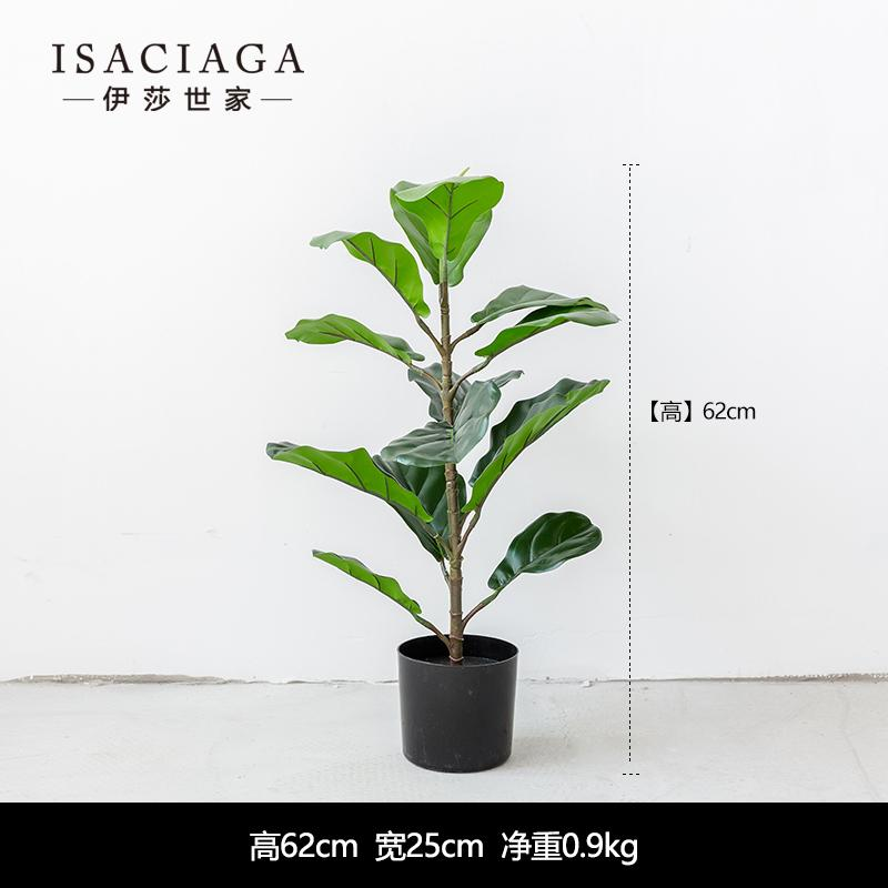 Isaciaga model plants