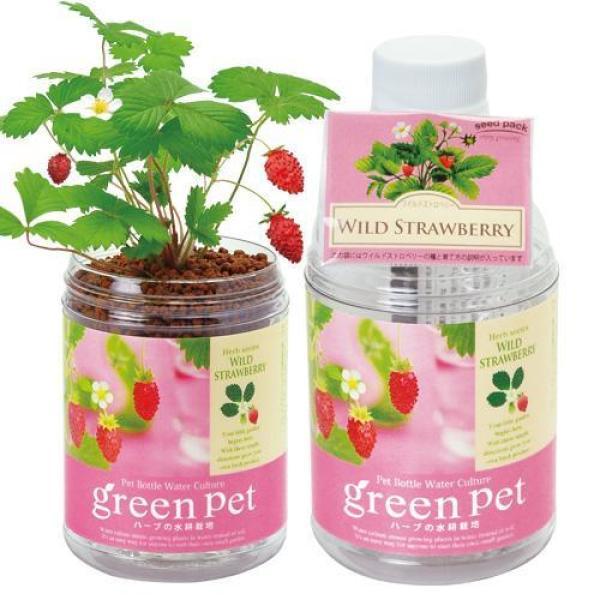 SEISHIN - Green Pet / Growing Kit Herbs, Vegetables, Plants