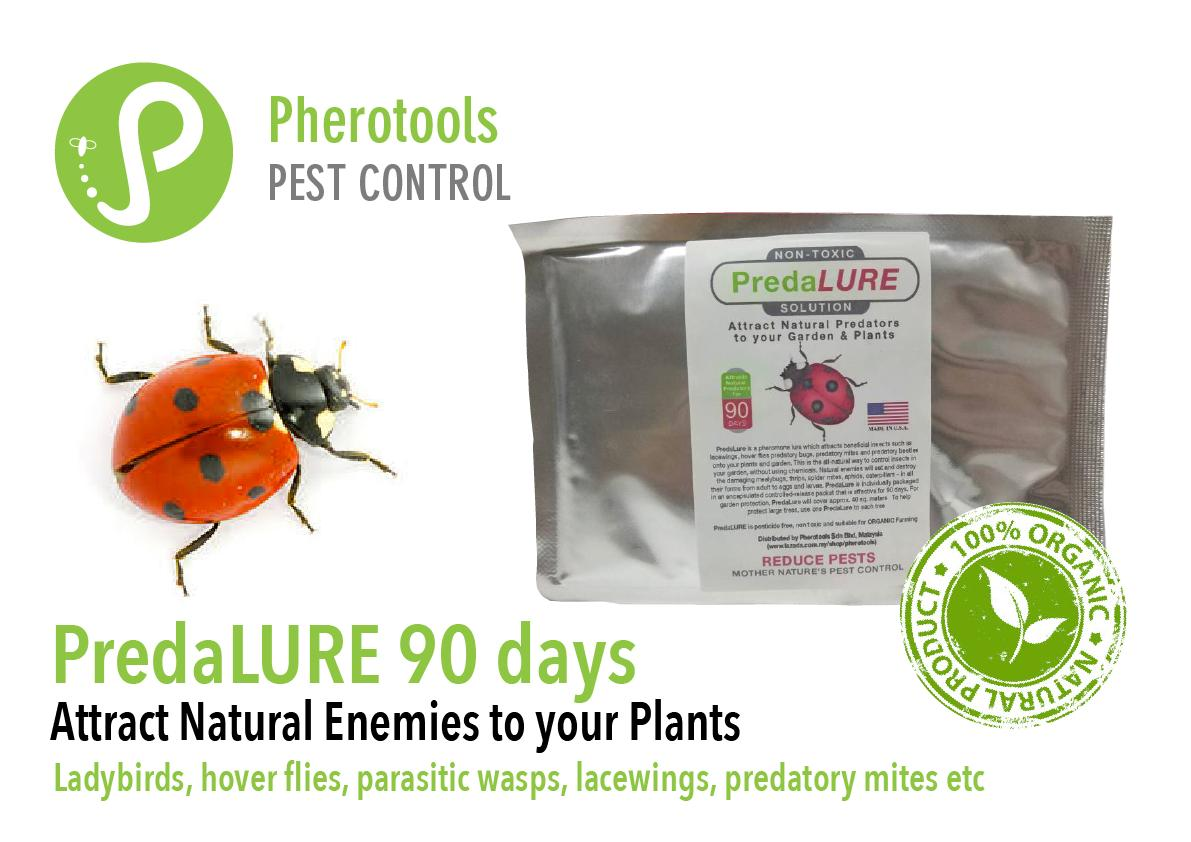 PredaLURE (90 days) - Attract Ladybirds, Lacewings & Natural Enemies to control Insect Pests on your Plants and Garden