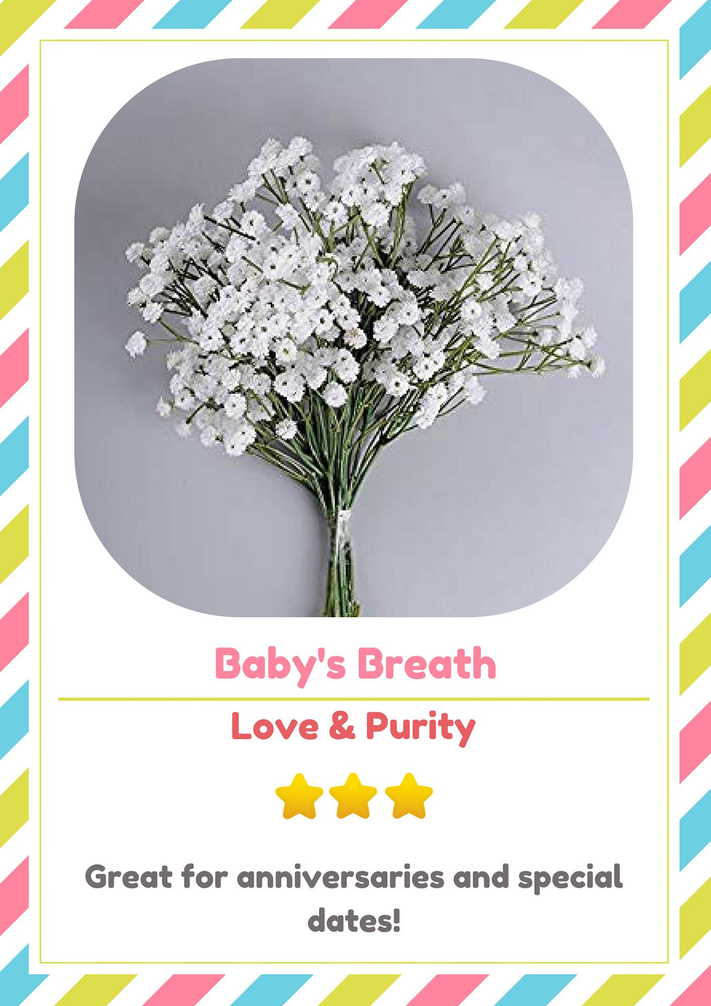 Perfect Gift! - Babys Breath Starter Kit