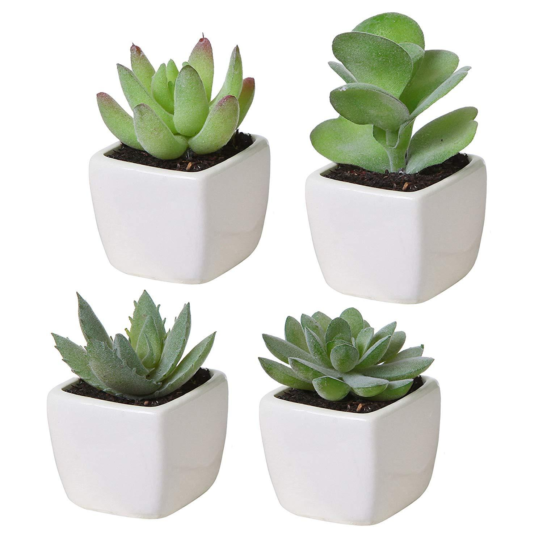 [SG] Succulents
