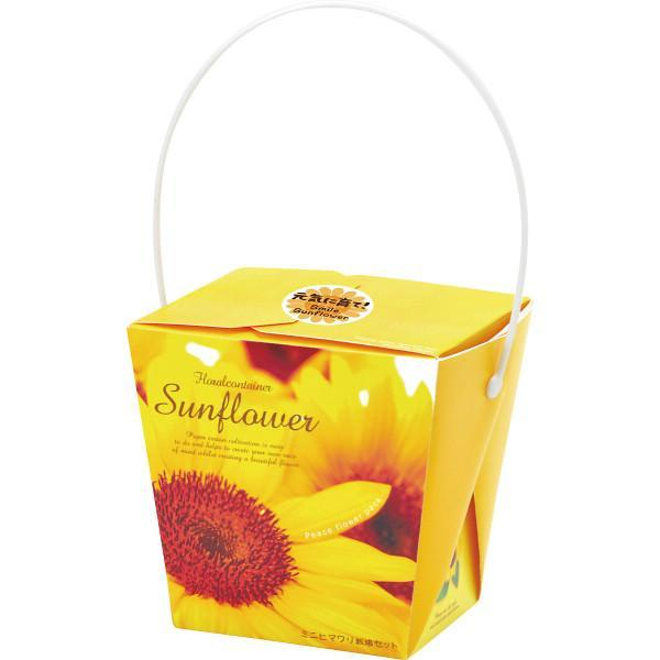SEISHIN - Smile Sunflower Container / Growing Kit
