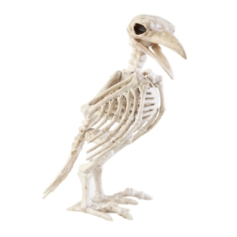 Harga Crazy Bone Skeleton Raven 100% Plastic Animal Skeleton Bones Horror Halloween Decoration Halloween Prop Bird Crow Skeleton Decoration - intl