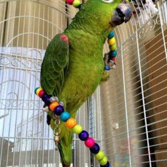 100CM Parrot Parakeet Toy Wooden Bird Ladder - 2