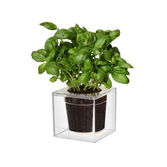 Harga Boskke Cube Self-Watering Planter (Imported from UK) Local Stock