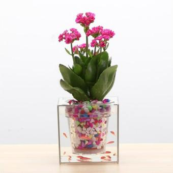 Boskke Cube Self-Watering Planter (Imported from UK) Local Stock - 4