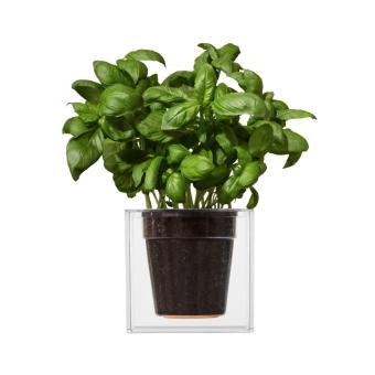 Boskke Cube Self-Watering Planter (Imported from UK) Local Stock - 2