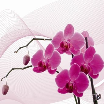 Bpago Oil Painting Print on Canvas Home Wall Art Decor for Bedroom 120x40cm- orchid(Export) - Intl - 4