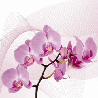 Bpago Oil Painting Print on Canvas Home Wall Art Decor for Bedroom 120x40cm- orchid(Export) - Intl - 2