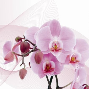 Bpago Oil Painting Print on Canvas Home Wall Art Decor for Bedroom 120x40cm- orchid(Export) - Intl - 3
