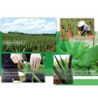 Pure Aloe Vera Gel - 99% Organic - 2