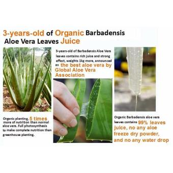 Pure Aloe Vera Gel - 99% Organic - 3