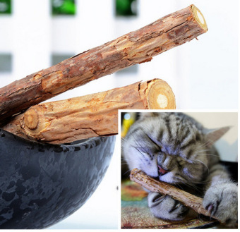 Harga Cat cleaning teeth Pure natural catnip pet cat molar Toothpaste stick 2 Pcs/bag cat snacks sticks cats catnip - intl